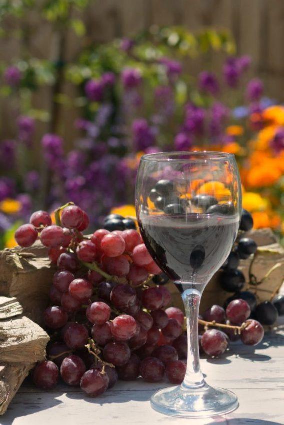 технические сорта винограда для красного вина