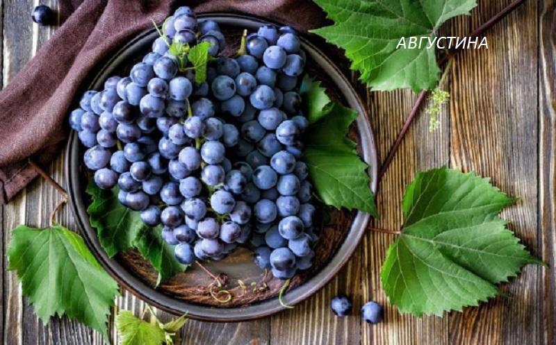 виноград Августа для вина