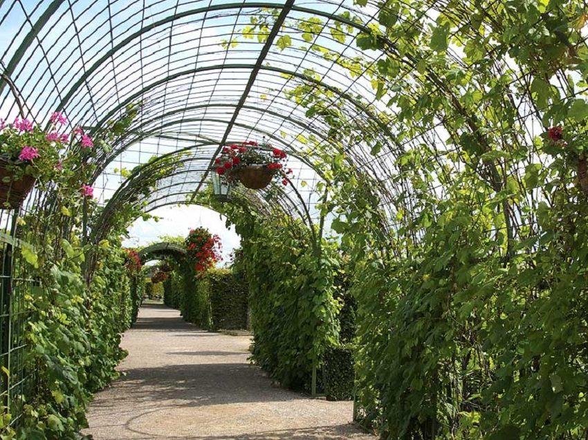 арка садовая для винограда