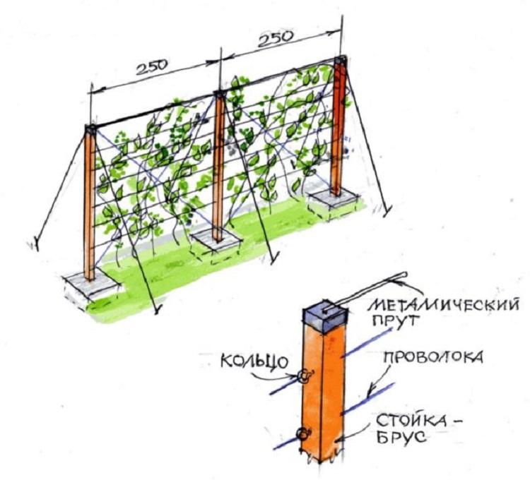схема конструкции одноплоскостной шпалеры
