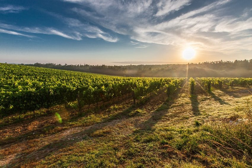 как правильно сажать виноград