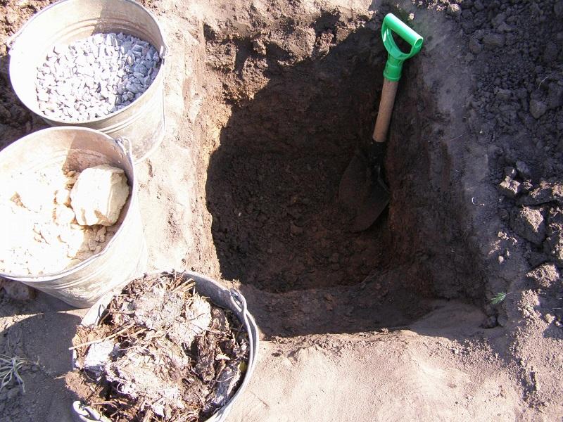 посадочная яма для саженцев винограда